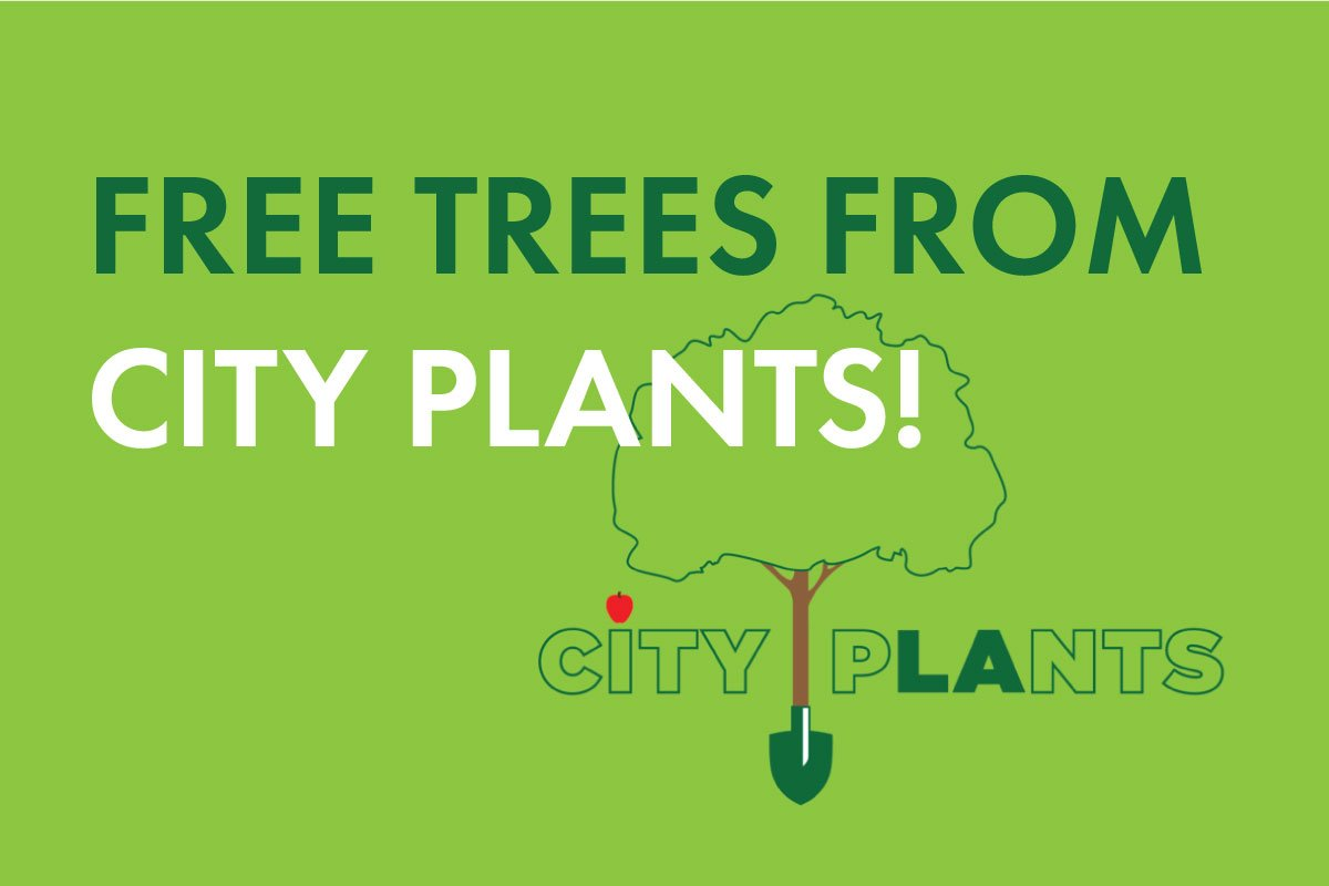 Get Free Trees from City Plants + Read Their Urban Forestry Report